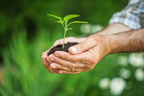 Návrh na čerpání daru zeStředočeského Fondu na podporu výsadby stromů